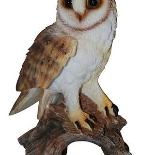 Real Life Barn Owl F