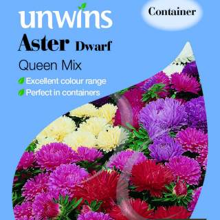 Aster Dwarf Queen Mix