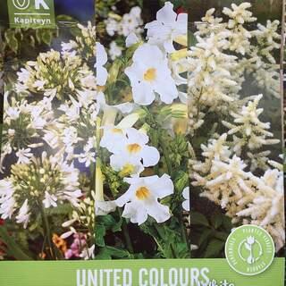 United Colours White