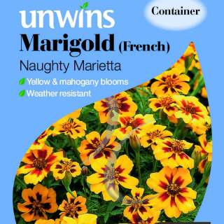 Marigold French Naughty Marietta