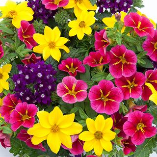 Trixi Pot 3 in 1 colour