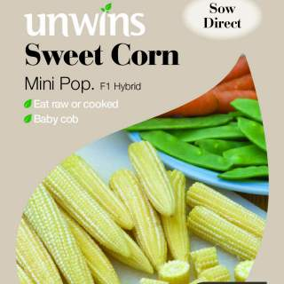 Sweet Corn Mini Pop