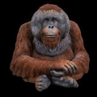 RL Orangutan D x 1
