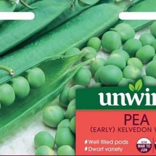 Pea (Early) Kelvedon Wonder