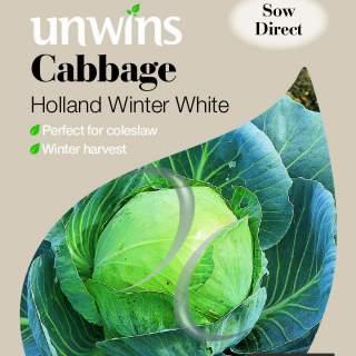 Cabbage Holland Winter White