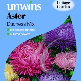 Aster Duchess Mix