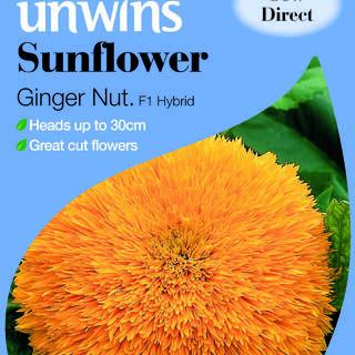 Sunflower Ginger Nut F1