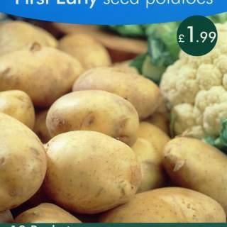 Seed Potato ROCKET