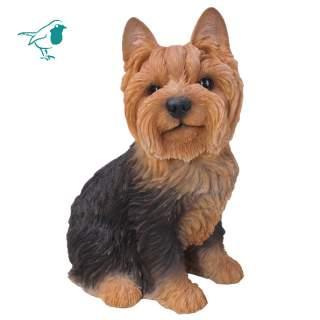Yorkshire Terrier Sitting B
