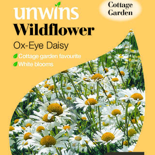 Wildflower Ox-Eye Daisy