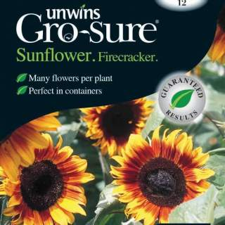 Sunflower Firecracker F1