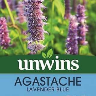 Agastache Lavender Blue