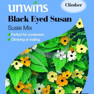 Black Eyed Susan Susie Mix