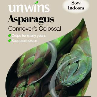 Asparagus Connover s Colossal