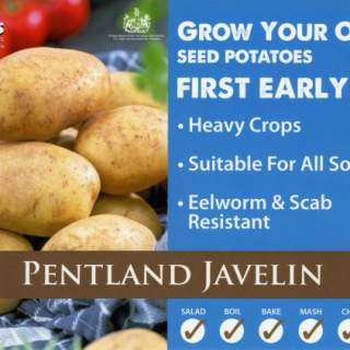 Seed Potato PENTLAND JAVELIN