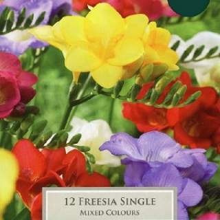 FREESIAS SINGLE 5up P/P