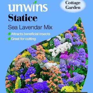 Statice Sea Lavender Mix
