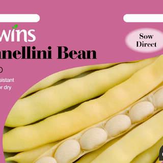Cannellini Bean Sorano