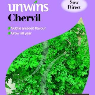 Herb Chervil