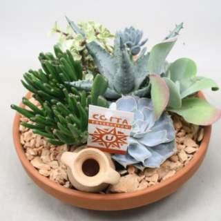 Succulents arrangement nr 964  P23