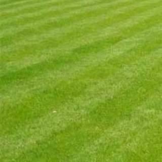 Lawn Seed Per Scoop