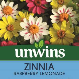 Zinnia Raspberry Lemonade