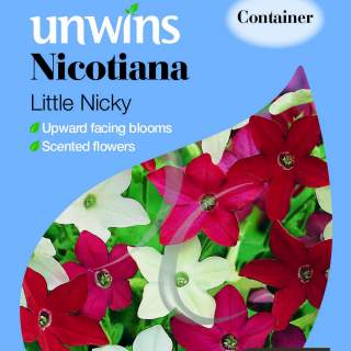 Nicotiana Little Nicky