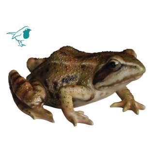 Real Life Frog F