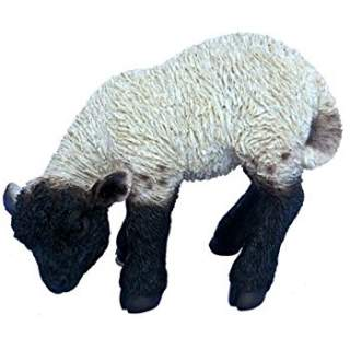 RL Black/White Lamb D x 4