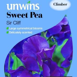 Sweet Pea Iris