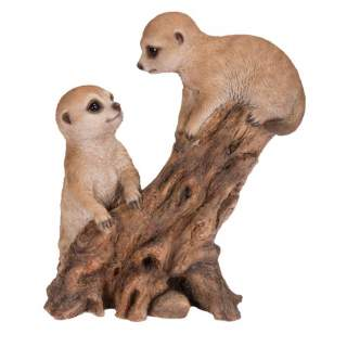 Climbing Baby Meerkats B
