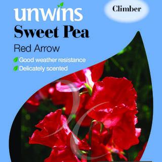 Sweet Pea Red Arrow