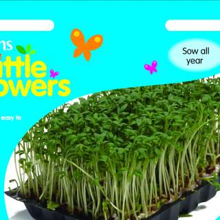 Little Growers Cress Kit