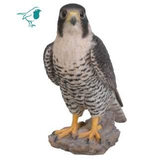 Peregrine Falcon B