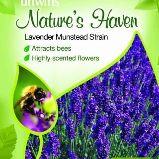 NH Lavender Munstead Strain