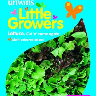 Little Growers Lettuce Cut n  come again