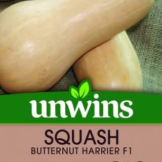 Squash Butternut Harrier F1