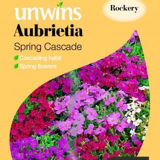 Aubrietia Spring Cascade
