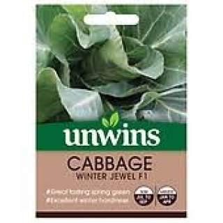 Cabbage (Spring Greens) Winter Jewel