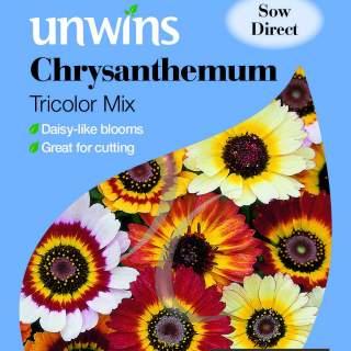 Chrysanthemum Tricolor Mix