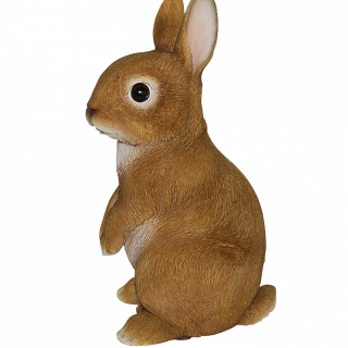 RL Young Rabbit E