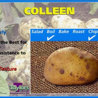 10 Colleen