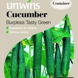 Cucumber Burpless Tasty Green