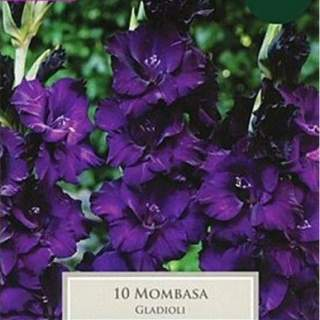 10 GLADIOLI MOMBASA 10-12