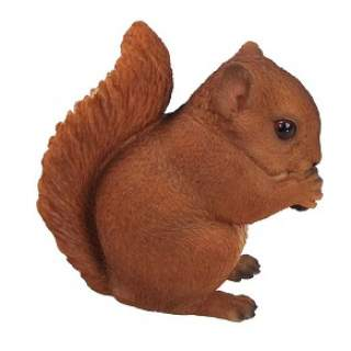 Red Baby Squirrel F
