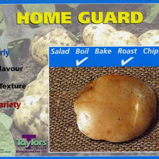 Seed Potato HOME GUARD