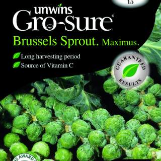 Brussels Sprout Maximus F1