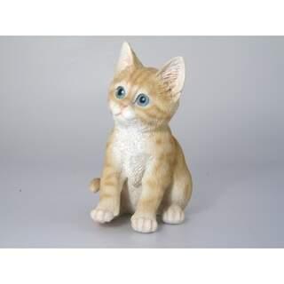 Kitten MIX COLOUR