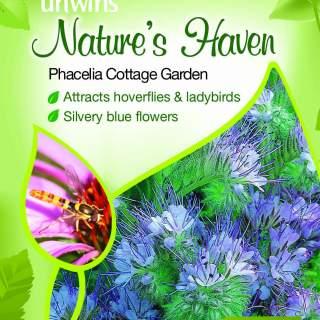 NH Phacelia Cottage Garden