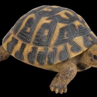 RL Hermann Tortoise F